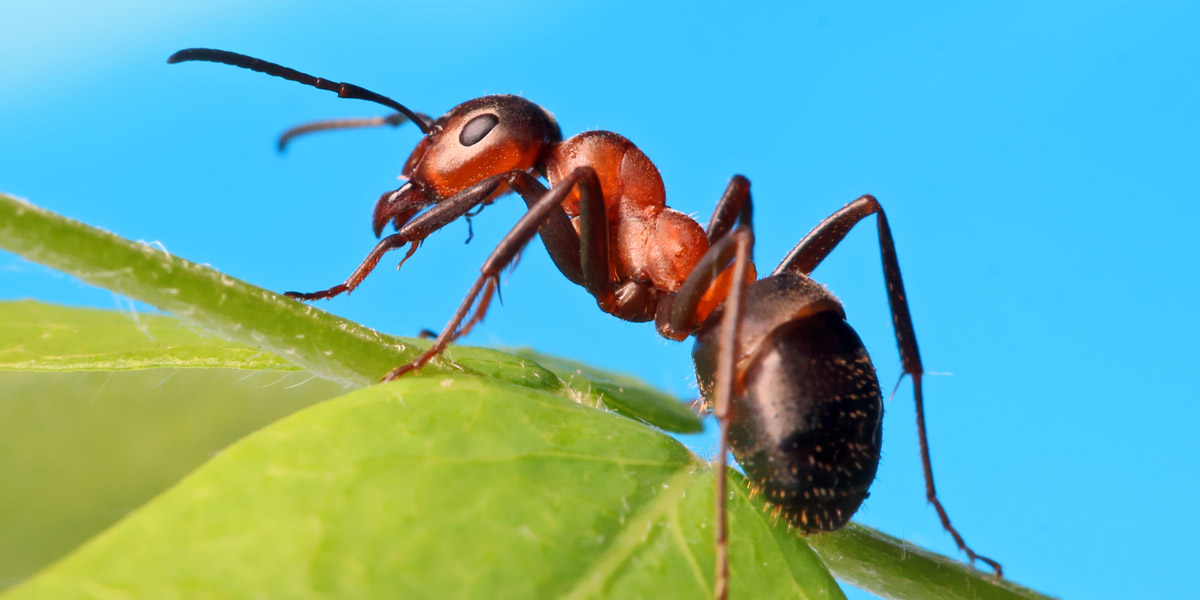 The Spirit of the Ant