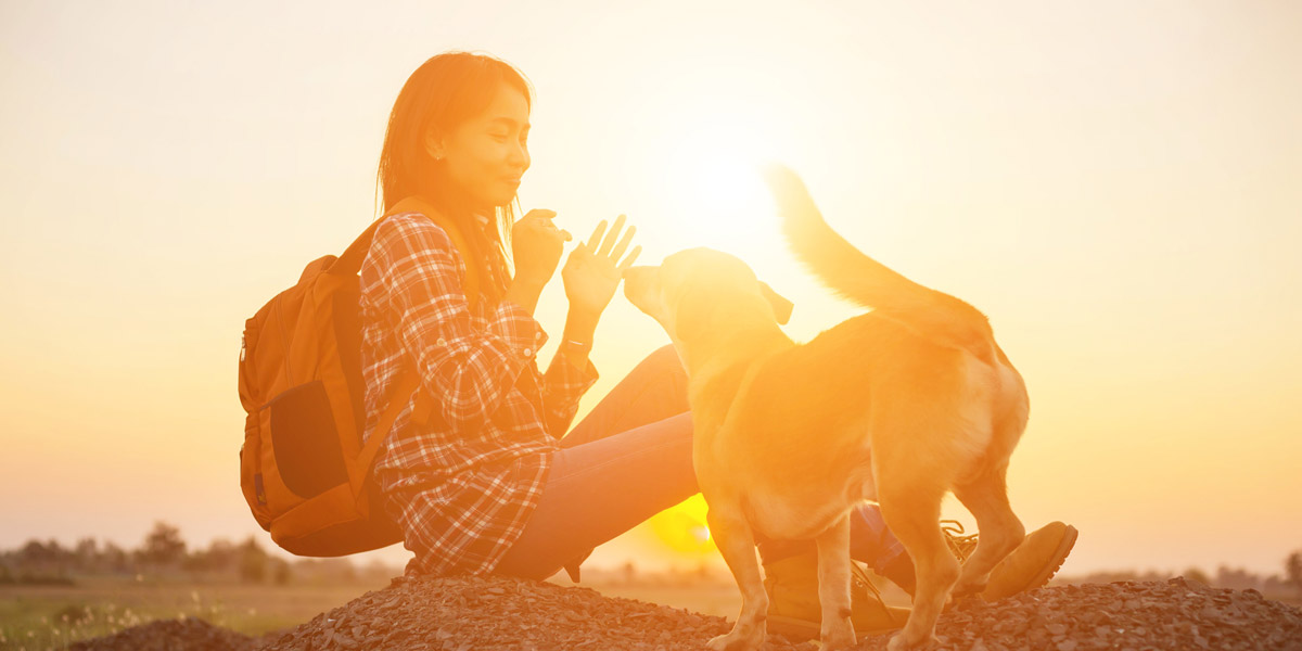 How Pet Psychics Give Readings
